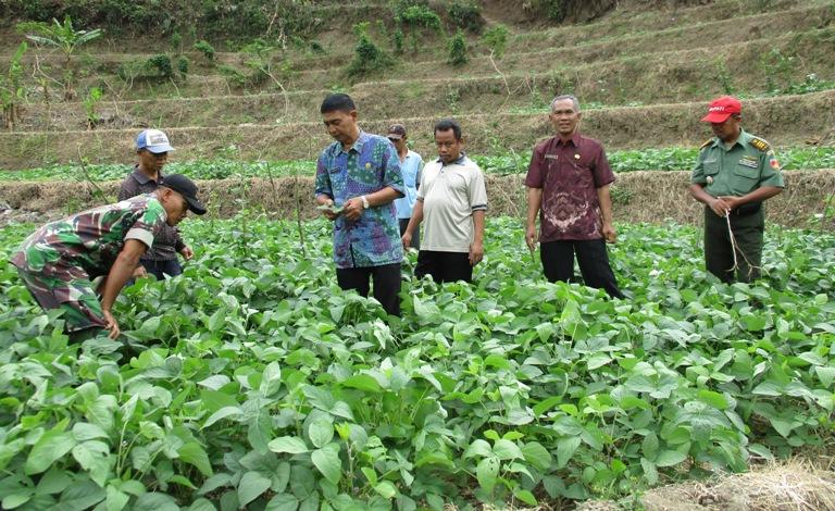 Danramil Lumbir, PPL, Babinsa serta Pengurus Kelompok Tani Bumi Asih sedang melakukan monitoring budidaya tanaman kedelai di lahan milik warga Desa Dermaji